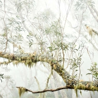 Le paradis blanc / The white paradise