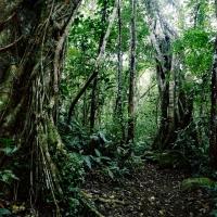 Forêt de Bon Accueil